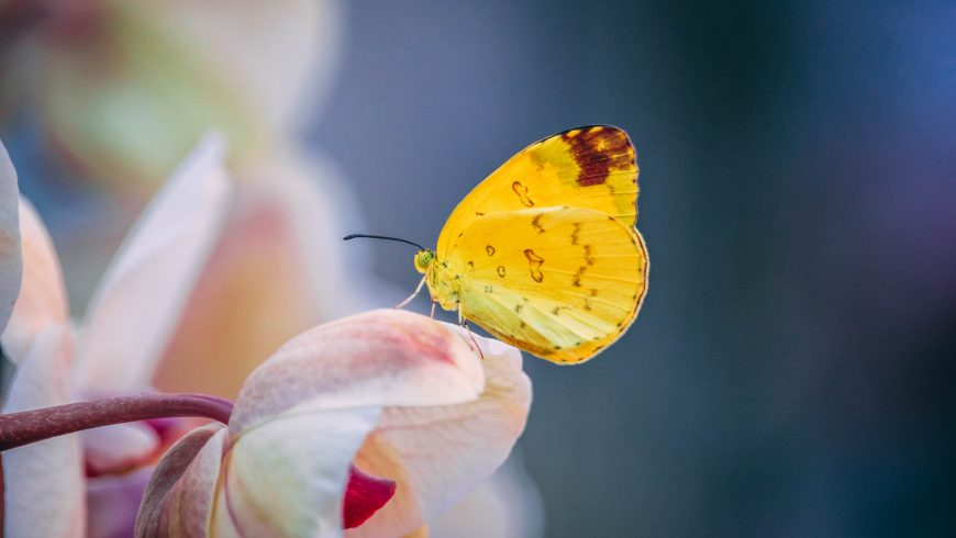 A yellow butterfly on a flower