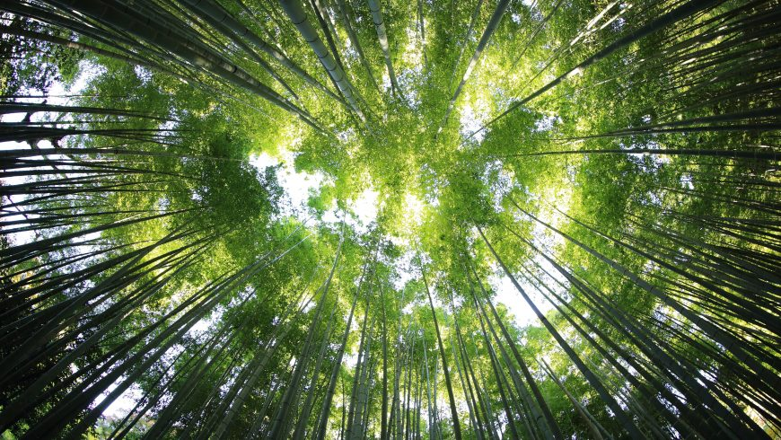 Plant new trees and protect forests to contrast climate change