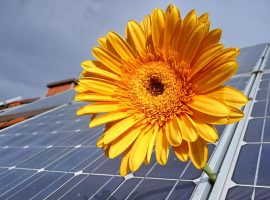 Solar panels with a yellow flower