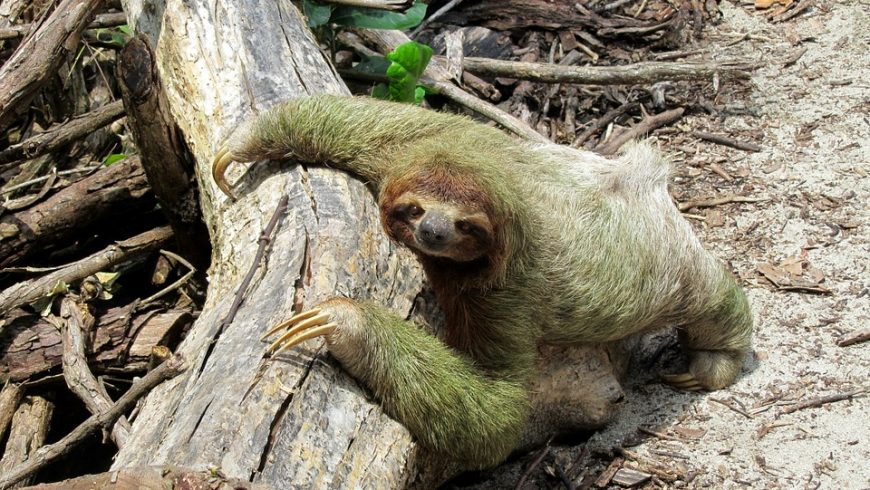 wild animal in Costarica