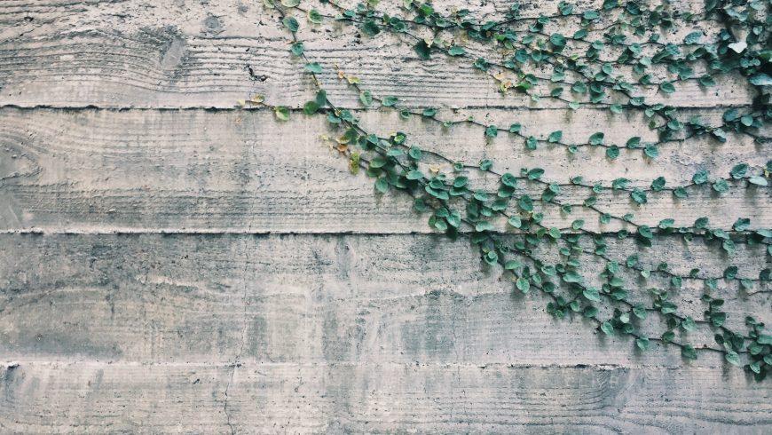 climbing plant, living walls