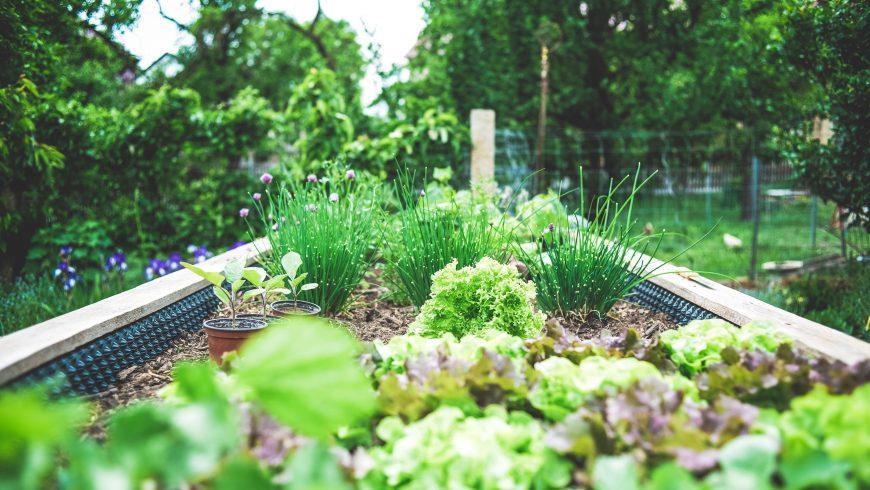 urban farming, living walls, nature, gardening
